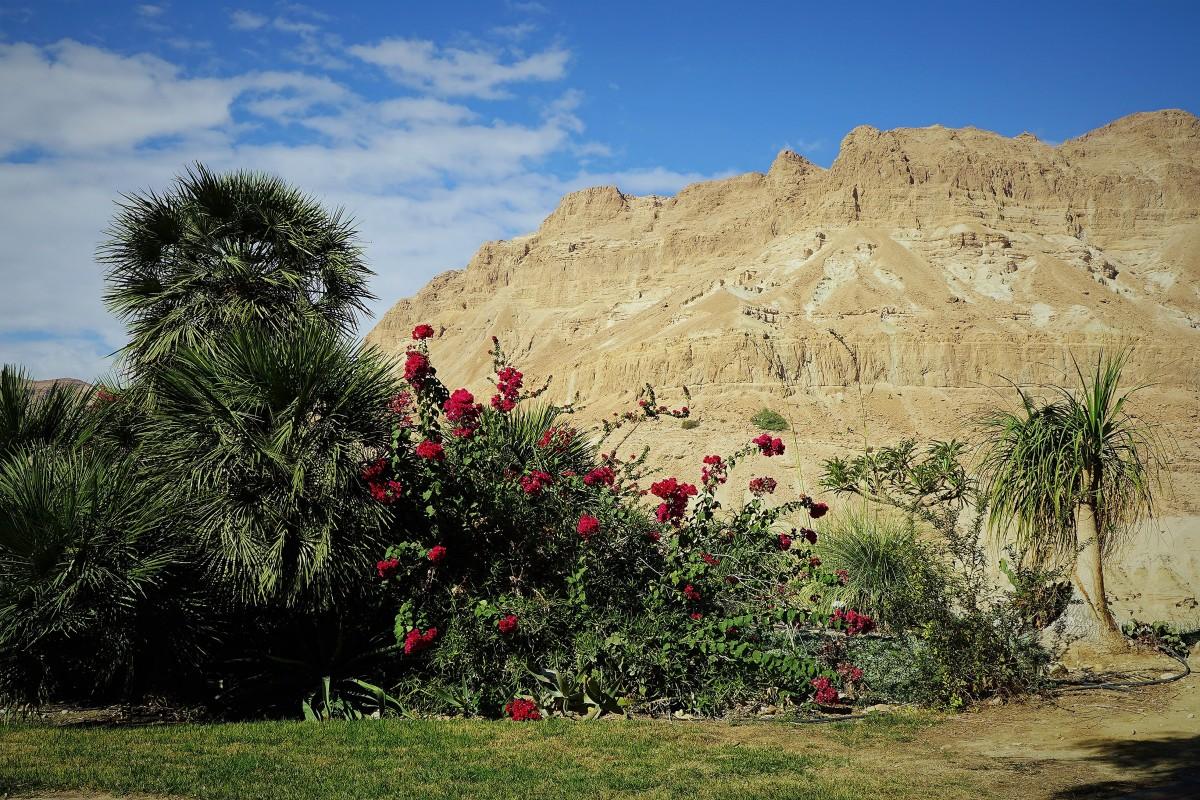 Wiara w ogród na pustyni
